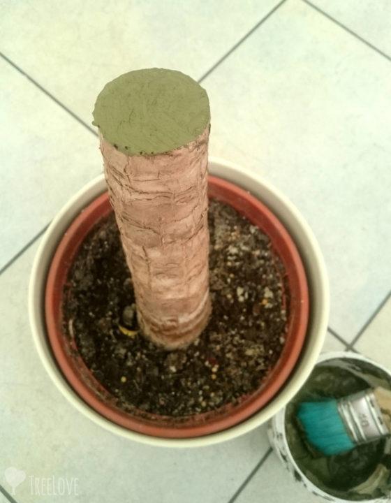 Yucca elephantipes-lacbalsam